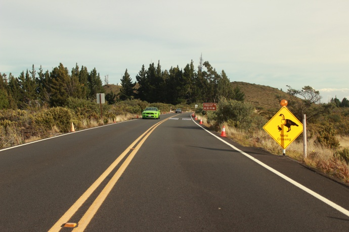 Signs and cones alert motorists to drive cautiously. Photo courtesy Haleakalā National Park.
