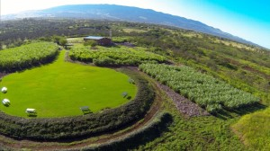 The new rum product is being produced at the company's distillery in Kula on Maui and will be available for purchase and sampling at the company farm beginning Sept. 1. Courtesy photo.