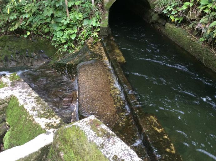 Wailuku Water Company tunnel. Courtesy photo.