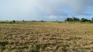 Freshly-mowed parcel of land. Photo courtesy of Country Excavation.