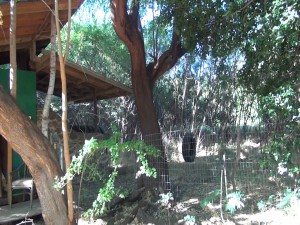 Goat pen and outbuilding, part of the 14 acres that now belongs to Montessori Hale O Keiki in Ukumehame. Courtesy photo.