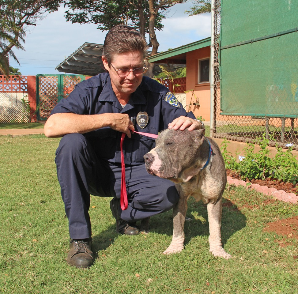 The Maui Humane Society launches 24-Hour Animal Response program. Photo credit: Maui Humane Society.
