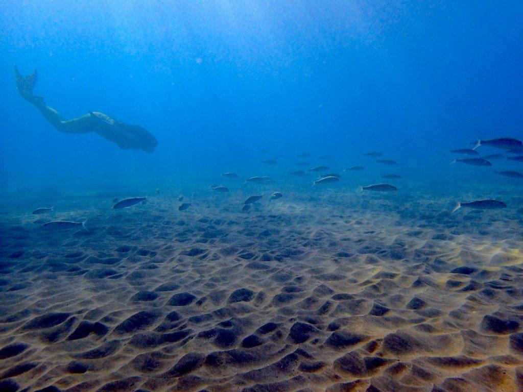Photo credit: Hawaiʻi Mermaid Adventures