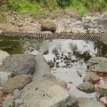 File photo of Iao Stream in West Maui where stream diversions and water rights have been the subject of Water Commission reviews.  Photo by Wendy Osher