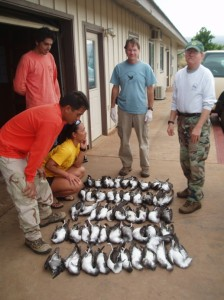 State wildlife biologist Fern Duvall (at right) at the Conservancy's Moloka`i office with 50 dead wedge-tailed shearwaters.  Photo credit: Nature Conservancy
