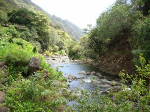 'Iao Valley Stream.  Photo by Wendy Osher.