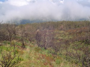 Forest Reserve Land in Upcountry, Maui. Photo by Wendy Osher.
