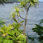 File photo East Maui coastline, by Wendy Osher.