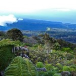 DLNR Program Aims to Protect Hawai'i Watershed Forests