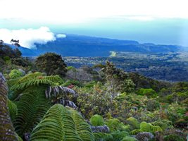 Waikamoi. Courtesy of Guy D. Hughes III