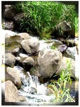 stream_164