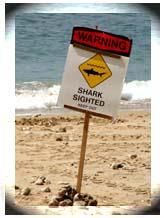 shark_sign_164