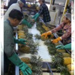 Haliimaile Pineapple Co. officials to discuss operations