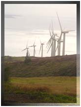 File photo of Kaheawa Wind Farm at Maalaea on Maui. By Wendy Osher.
