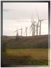 File photo of Kaheawa Wind Farm at Maalaea on Maui. By Wendy Osher.