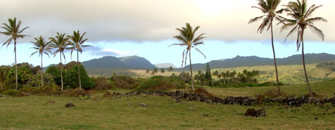 Maui Now : Upcountry Man Dies After Being Rescued From