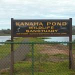 Kanaha Pond Wildlife Sanctuary sign.  Photo courtesy DLNR.