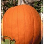 UHMC Pumpkin Patch to benefit Agricultural programs