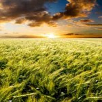 Foreign Persons Must Report US Agricultural Land Holdings