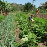 Organic Certification Cost-Share Assistance Now Available