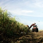 Clause Dangerous to Maui's Sugar Industry Rejected by US Senate