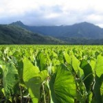 Try poi in Hawaii, a sacred paste made from the taro plant.