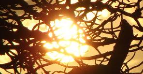 Sunshine, file photo by Wendy Osher.