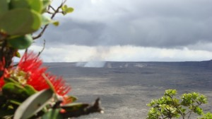 'Ōhi'a tree in the foreground with the Kilauea Volcano as a backdrop, file photo by Wendy Osher.