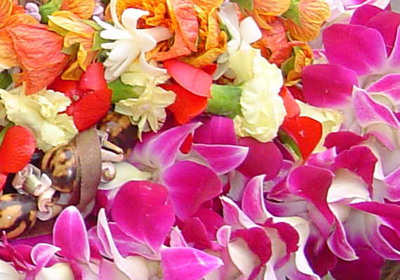 Graduation leis, file photo by Wendy Osher.