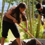 Liko Aʻe scholar Manalani English doing community service, photo courtesy UHMC.