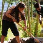 Liko Aʻe scholar Manalani English doing community service, photo courtesy UHMC.