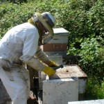 Hands-On Beekeeping Class Painless