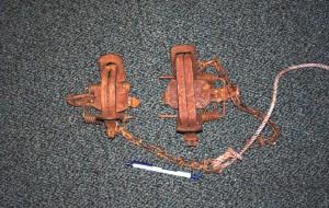 Foothold trap. Photo courtesy Kauai County.