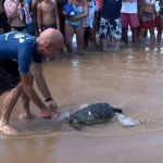 M.O.C. Curator John Gorman releases a young turtle into the pacific. Photo courtesy of  the Maui Ocean Center