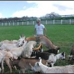 Award Offered for Stolen Milking Goats on Maui