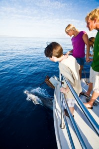 Maui Tourism Increasing