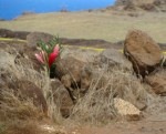 Flowers were left at Nakalele point near the place where a woman's body was found following a domestic dispute.  Photo by Wendy Osher.