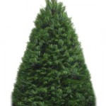 Kahului Rotary Club's annual christmas tree fundraiser features premium sheered douglas fir  trees. Courtesy photo.