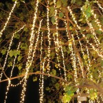 Holiday lighting of the Banyan Tree, photo courtesy Lahaina Town Action Committee.