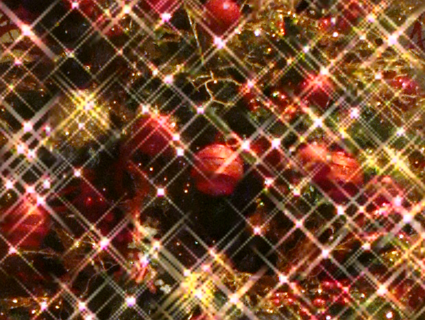 Grand Wailea Annual Tree Lighting Ceremony, Dec. 2