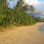 Encroaching vegetation on Kahala beach, photo courtesy state Department of Land and Natural Resources.