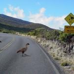 Photo courtesy: Haleakalā National Park.