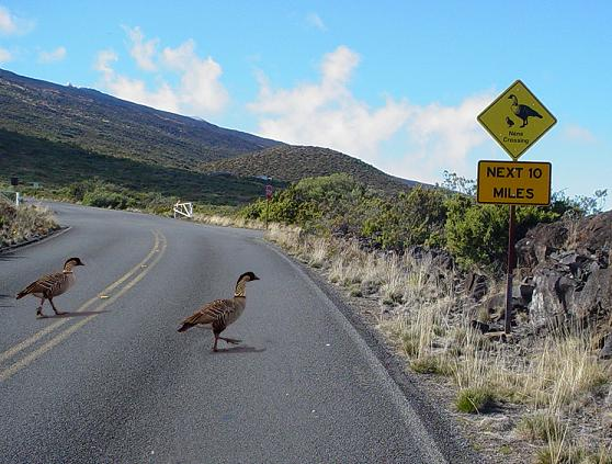 Photo courtesy: Haleakalā National Park.