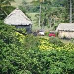 Hana, Maui. File photo by Wendy Osher.