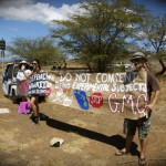 The week-long demonstration comes of the heels of a separate protest in October, organized by Millions Against Monsanto Hawaii, which raised similar concerns over GMO crops.  File photo by Madeline Ziecker.