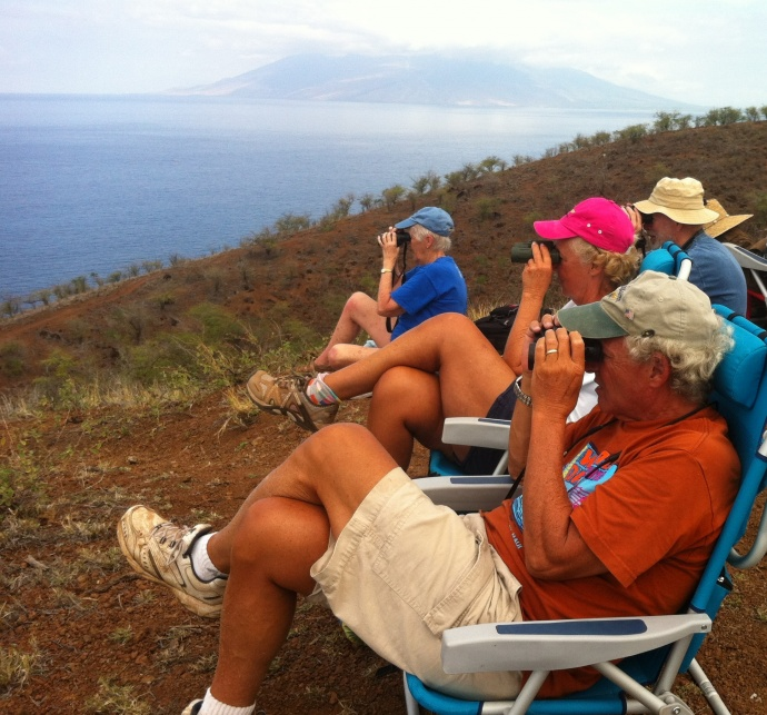 Great Whale Count, Maui. File photo courtesy, Pacific Whale Foundation.