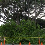 BRIEF: Vevau St. in Kahului Closed Due to Tree Cleanup