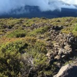 Hawai'i Celebrates Arbor Day with Forest Protection Funding
