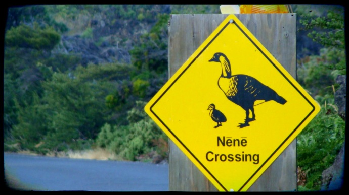 Nene sign at Haleakala National Park.  Photo by Wendy Osher.