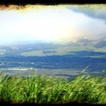 Central Maui sugar cane fields. Image by Wendy Osher.